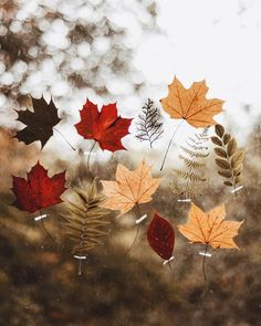Duke Ellington & John Coltrane - My little brown book ⠀ .Duke Ellington & John Coltrane - My little brown book ⠀ . Duke Ellington, Photography Winter, Beauty Photography, Autumn Aesthetic, Autumn Cozy, Seasons Of The Year, Happy Fall Y'all, Autumn Inspiration, Fall Season