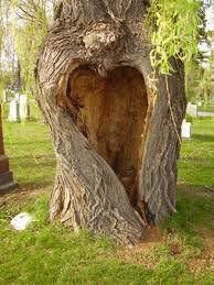 Tree of ♥