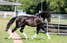 Learn about groundwork exercises for the dressage horse with Uta Gräf.