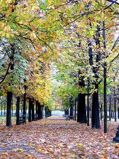 Jardin di Tulieres #Paris #France