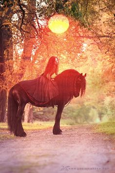 by Gosia Makosa another friesian Pretty Horses, Beautiful Horses, Animals Beautiful, Cute Animals, Horse Girl, Horse Love, Gypsy Horse, Friesian Horse, Andalusian Horse