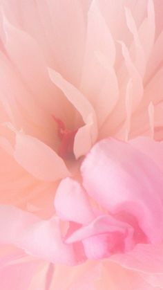 Blooming pink flower iphone 6 wallpaper pretty in pink! Wallpaper S8, Wallpapers Wallpapers, Flower Iphone Wallpaper, Screen Wallpaper, Blooming Flowers, Pink Flowers, Iphone 8, Living At Home, Pretty In Pink