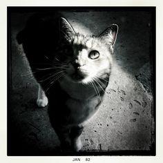 """My Kitty """"Fifi"""""""