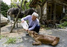 Naoto Matsumura is the only person who wasn't afraid of living in the Fukushima Exclusion Zone. He left the town with the others, but then returned to take care of animals left at home.