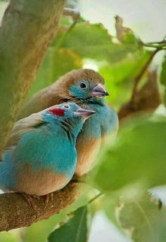 Love is in the air... #beautifulbird