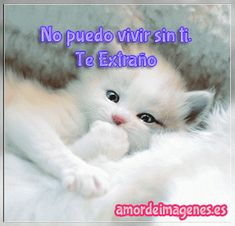 Cute Cats And Kittens And Dogs Cute Kittens Background Cute Kittens, Cats And Kittens, White Persian Kittens, Animals And Pets, Cute Animals, Animals Photos, Image Chat, Photo Chat, Good Night Sweet Dreams
