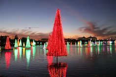 SeaWorld Orlando Christmas Celebration