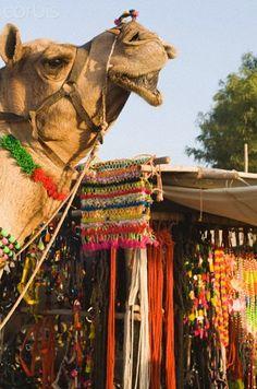 Pushkar camel festival , India