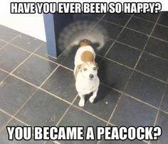 ヅ Happy Peacock