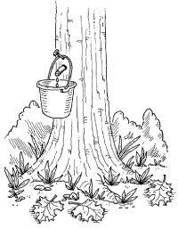 12 Best Maple Sugaring Study in February images in 2015