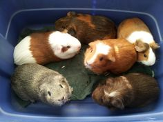 I'd LOVE a bucket full of piggies :)