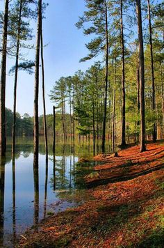 Sleep under the stars at Allatoona Lake Campgrounds in Cartersville, #Georgia!