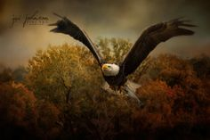 Open edition Bald Eagle wildlife canvas art print by Jai Johnson © Jai Johnson   JaiArt.Com - All Rights Reserved  Choose your desired print size below.  Artist watermark will NOT appear on purchased prints.  Production takes 2-4 business days.  Shipping is free.  About Our Canvas Prints   Our canvas prints are created on an acid-free, pH neutral, poly-cotton matte base canvas with archival inks. A matte protective clear coat is applied, preserving it's original matte appearance and making…