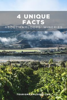 Kamloops is one of the northernmost grape growing areas with four wineries, six vineyards, and 120 acres under vine. Discover these 4 hidden gems and little known facts about them. Cider Making, Unique Facts, Home Buying Tips, Growing Grapes, Shop Local, Unique Recipes, Wineries, British Columbia, Acre