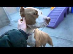 I AM SAFE THANK YOU SOFI – A1069031 | Help us Save NYC AC&C Shelter Dogs