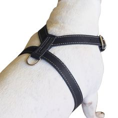 Made of 1 wide high quality genuine leather. Strong and comfortable, wide chest piece designed to equally distribute tension. Best choice for daily walks and training. This size is recommended for Medium and Large breeds, sized to fit 25-30 inches chest circumference. Made of genuine