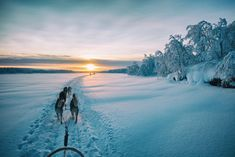 Japanese Photographer Captured Beautiful Winter Lights Of Finland