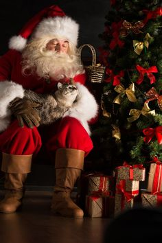 Kitty is leaving biscuits for Santa this year. Photo: Santa Claus sitting near Christmas tree and embracing his cat by Shutterstock Father Christmas, Christmas Love, Christmas Photos, All Things Christmas, Christmas Animals, Christmas Cats, Hygge Christmas, Xmas, Merry Christmas Ya Filthy Animal
