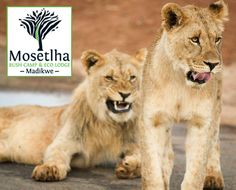 Mosetlha Bush Camp and Eco Lodge, Madikwe Game Reserve Accommodation