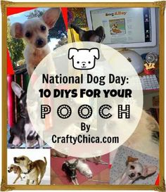 10 DIY Ideas For Dogs