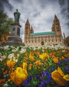 Blooming Cathedral (Pécs, Hungary) - by KRÉNN IMRE