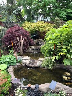 Dragonfly Hollow in Bothell, WA | Fine Gardening