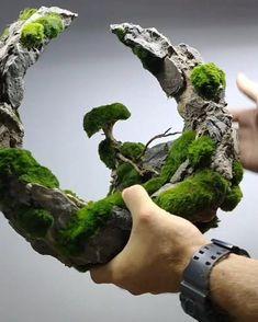 Moss Terrarium, Garden Terrarium, Orchid Terrarium, Bonsai Art, Bonsai Plants, Paludarium, Vivarium, Aquarium Landscape, Plantas Bonsai