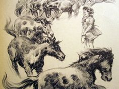 """Black and white illustration, full page, from """"Misty of Chincoteague"""" children's horse book with Maureen, ponies -- for arts, crafts"""