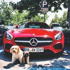 The perfect combo! Photo via @supercarpups.  #MercedesBenz #MercedesAMG #AMG #supercarpups #mbcar #mbfamily #mbfanphoto #thebestornothing #redcars