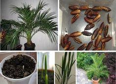 Propagation, Fruit Trees, Gardening Tips, Vegetables, Nature, Facebook, Gardening, Palmas, Backen