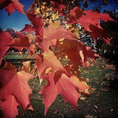 I ♡ crushy #fall #leaves
