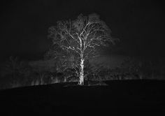 Winter Tree - The trees that have it in their pent-up buds To darken nature and be summer woods  ~Robert Frost