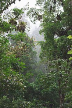 blog travel costa rica pacuare lodge rainforest wildlife copyright paulinefashionblog.com   Costa Rica : RIO PACUARE