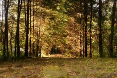 Caminata por el bosque, en Rancho San Martín Fotografía: Jann Nat