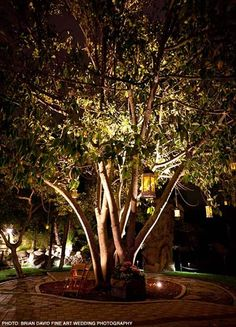 Stone Gardens Fallbrook Our venue stone gardens fallbrook ca our actual wedding pinterest stone gardens temecula reception and ceremony locations workwithnaturefo