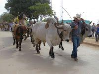 Festas de Carros de Boi: Os carros de boi irão cantar na 246ª Festa de Sant...
