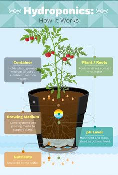 Growing Food Indoors with Hydroponic Gardening Homesteading  - The Homestead Survival .Com