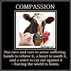 Have compassion for all living beings. Live a vegan cruelty free life.