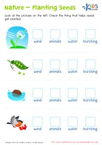 Plants And Seeds 1st Grade Worksheet Kids Preschool