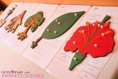 Botánica Montessori - Plantillas para los puzzles - Imprimible - Creciendo con Montessori