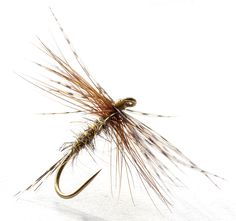 North Country Angler