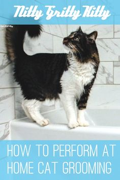 Kitty's are pretty self-sufficient when it comes to hygiene; however there are times when they need a little help. In this article we discuss how to preform at-home cat grooming without losing an eye or your cat's respect! Cat Care Tips, Dog Care, Pet Tips, Cat Bath, Cat Hacks, Mama Cat, Cat Shedding, Dog Agility, Cat Grooming