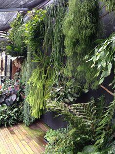 7 Top Ideas For Your Vertical Vegetable Garden Balcony Garden, Herb Garden, Vegetable Garden, Vertikal Garden, Home And Garden Store, Growing Herbs, Tropical Plants, Tropical Gardens, Houseplants