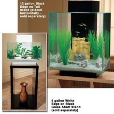 1000 images about zen aquarium on pinterest aquarium for Decoration zen aquarium