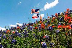 Wildflowers & Flags