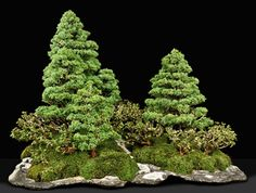 Beautiful bonsai group forest in a man made slab