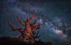 Milky Way at White Mountain by Lara Koo - Photo 166521325 / 500px
