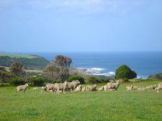 King Island, Tasmania.