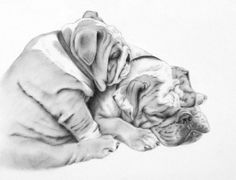 Custom Pet Portrait 11x14 Charcoal Drawing of by JaclynsStudio