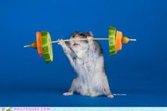 This is how I imagine I look when I'm trying to lift weights at the gym.